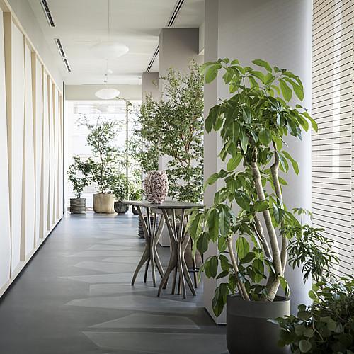 Træbrændte Cylinder plantekrukker Ø43 x H37 og Ø70 x H50 cm
